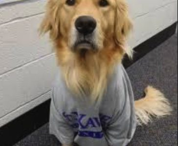 Xavier Therapy Dog